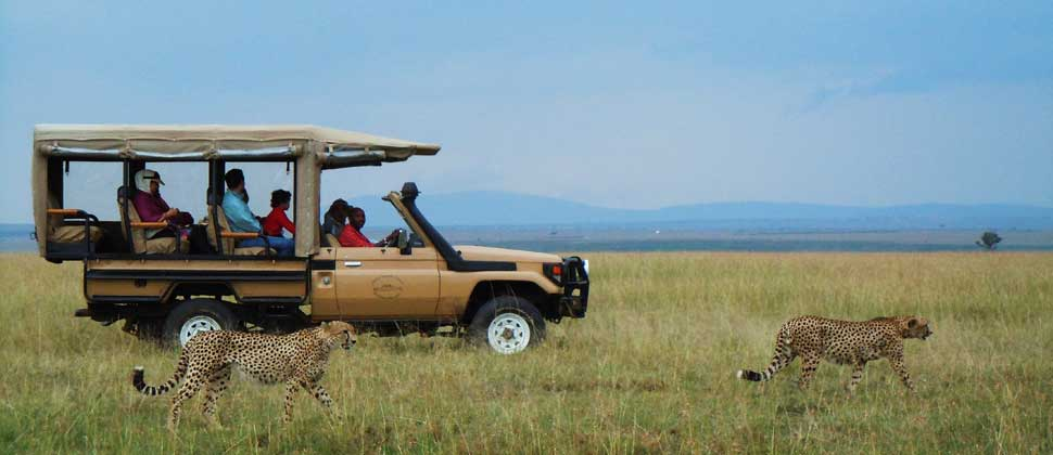 【动物大迁徙】肯尼亚内罗毕+马赛马拉mara